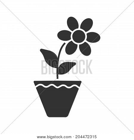Crocus in flowerpot glyph icon. Silhouette symbol. Negative space. Vector isolated illustration