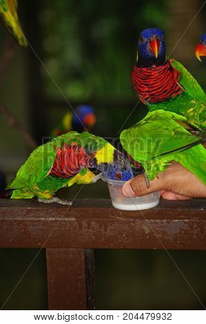 Hand Holding and Feeding colorful Parrots - Animal Care Concept