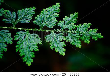 Detail of beautiful tropical fern branch with leaves Borneo Malaysia