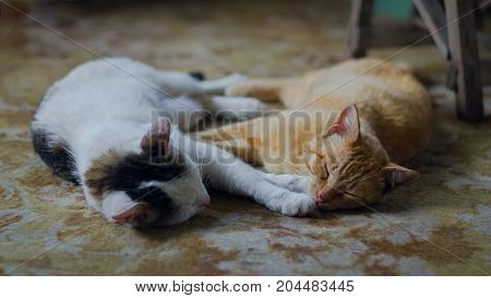 Farm cats sleeping on the farmhouse porch resting after the night prey