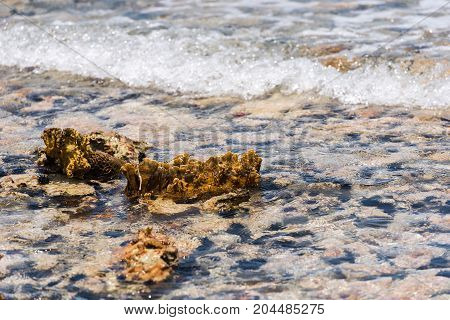 Seabed Through Crystal Clear Water. Marine Blur Background, Rocky Seabed Through Clear Water In Baya