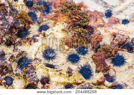 Sea Urchins On The Ocean Floor. Close-up.