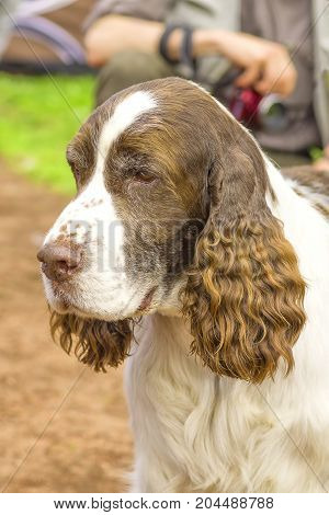 Hunting dog close-up. Space under the text. 2018 year of the dog in the eastern calendar Concept: friend, protection, loyalty, vigilance, security