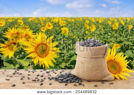 sunflower seeds in burlap sack, fresh sunflower on wooden table with natural background. Blooming sunflower field with blue sky. Agriculture and harvest concept