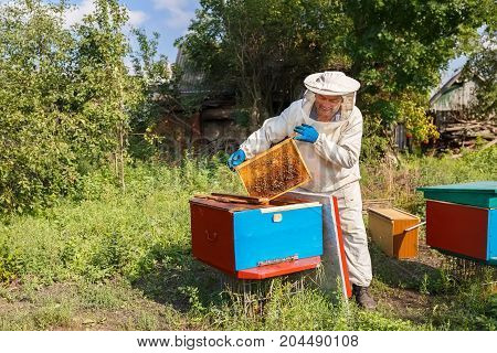 beekeeper holding a honeycomb full of bees. Beekeeper in protective workwear inspecting honeycomb frame at apiary. Beekeeping concept. Beekeeper harvesting honey