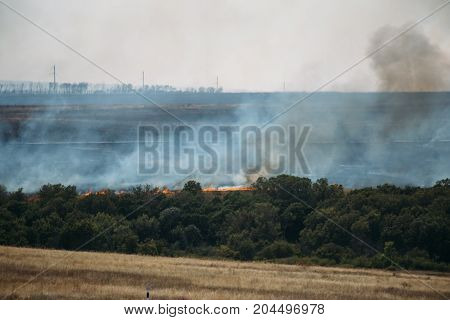 Fire in forest, smoke from wildfire, natural disaster
