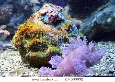 Multi-colored algae and interesting fish in the ocean