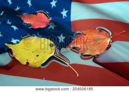 Autumn leaves on a wet American flag