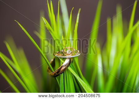 wedding rings in green grass in studio, neytral daylight
