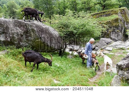 Man Who Takes Care Of His Goats At Foroglio