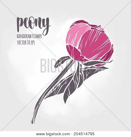 Floral plant botany element. Colorful illustration on light background for your design.