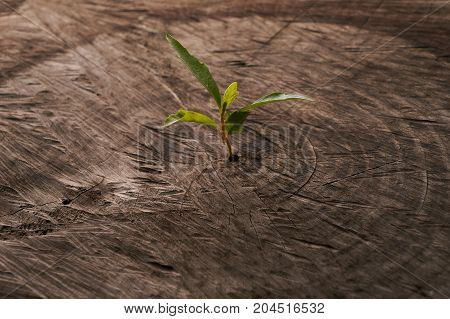Sprouts Growing On An Old Tree Stump