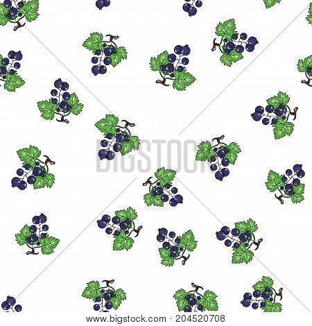 Vector currant seamless pattern. Hand drawn fruit illustration for backgrounds texture food packaging design