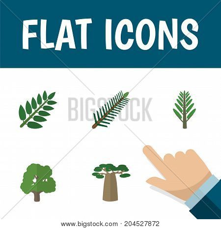 Flat Icon Ecology Set Of Jungle, Decoration Tree, Acacia Leaf And Other Vector Objects