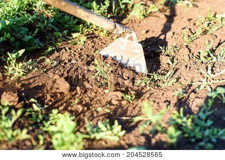 Garden Hoe Weeding A Garden Area