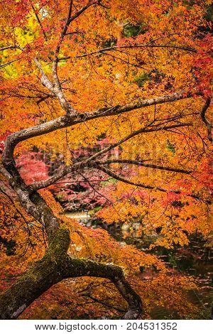 Autunm Trees