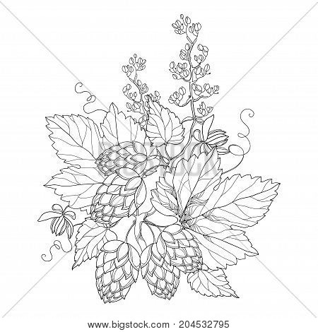 Vector stem with ornate Hops or Humulus. Cones and leaves in black isolated on white. Outline Hops for beer and brewery decor. Organic elements in contour style for coloring book and design.