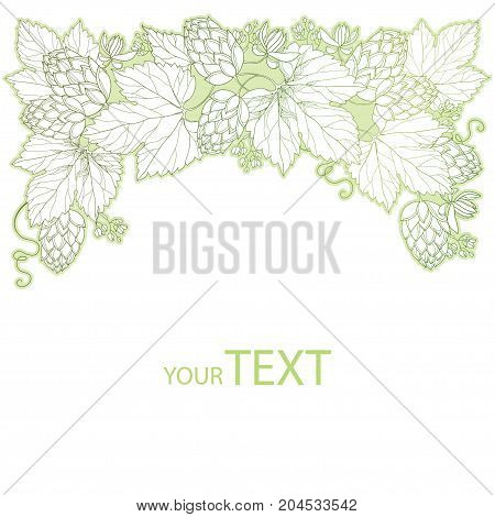 Vector vignette with ornate Hops or Humulus. Cones and leaves in pastel isolated on white. Outline Hops for beer and brewery decor. Herbal elements in contour style for decoration and coloring book.