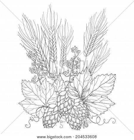 Vector stem with ornate Hops and barley ears. Outline barley and hops in black isolated on white. Contour Hops and barley for beer and brewery decor. Beer elements in contour style for coloring book.
