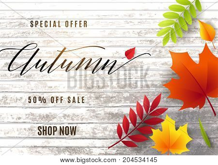 Vector illustration of fashion autumn sale banner with wood tree texture, text sign 50 percent off, falling multicolor leaves rowan, maple, birch, willow, chestnut, ash