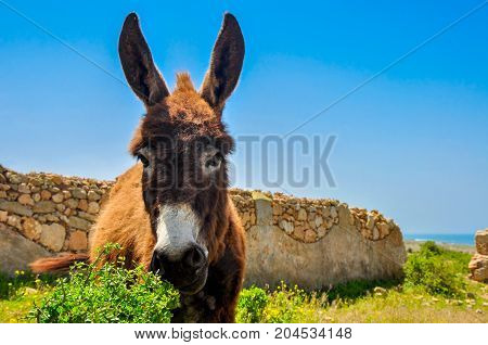 funny neddy costs against the background of a stone wall per bright sunny day