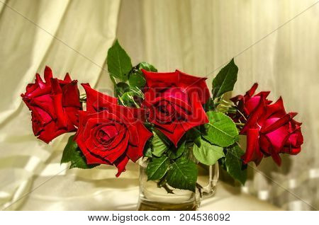 Bouquet of large red roses in a large glass mug on a background of folds of light curtains