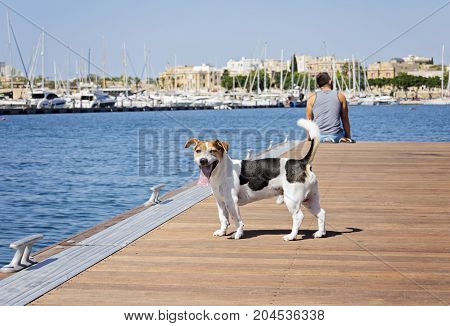 Dog jack russell terrier and man on the floating pier on a sunny day. Friendship and travel with dog