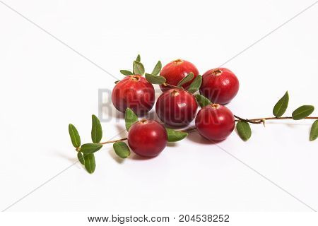 Six cranberry and a sprig with leaves on a white background. Studio, macro.