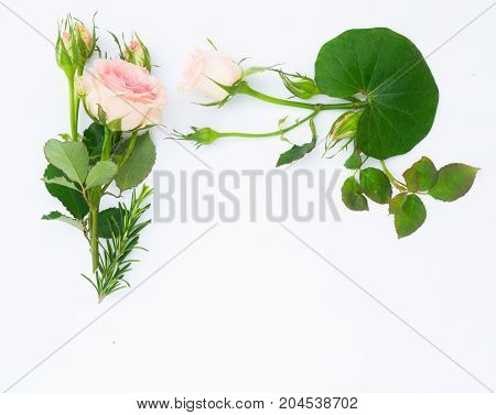 fresh flowers and leaves border on white background