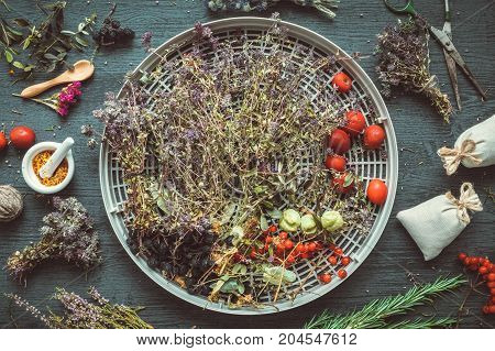 Drying thyme flowers and healthy berries on tray of herb dehydrator medicinal herbs mortar and sachet on table. Top view flat lay.