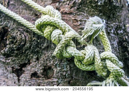 A Lot Of Knots Of A Thick Rope On A Background Of A Wooden Bark Of Spruce. The Concept Of Intricate