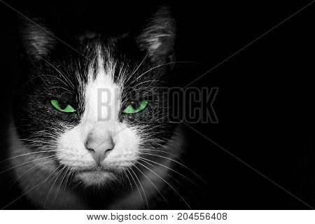 Black and white Portrait of a cat with a gaze and green eyes