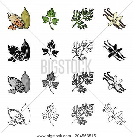 Cocoa beans, a leaf of a herb of a dill, a parsley, spice vanilla. Herbs and spices set collection icons in cartoon black monochrome outline style vector symbol stock illustration .