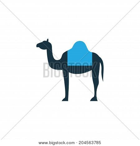 Premium Quality Isolated Dromedary Element In Trendy Style.  Camel Colorful Icon Symbol.