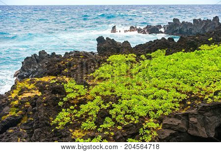 Waianapanapa State Park on Maui island of Hawaii is featuring black lava sand, tidal caves & native plants