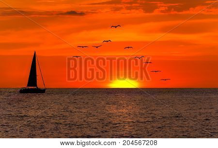 Sailboat sunset is a silhoette of a boat sailing along the ocean water at sunset with a flock of birds following behind.