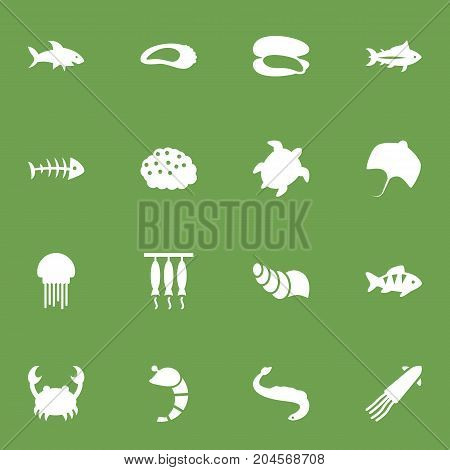 Collection Of Shark, Shell, Lobster And Other Elements.  Set Of 16 Food Icons Set.