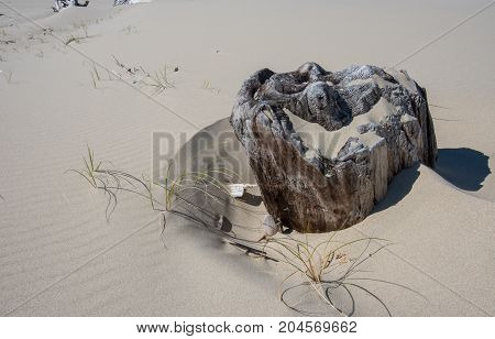 Drift Wood Stump Buried In Sand
