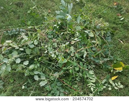 leaves and branches and weeds on a green lawn poster