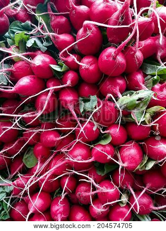 Radish background - numerous radishes stalked together for sale at the market
