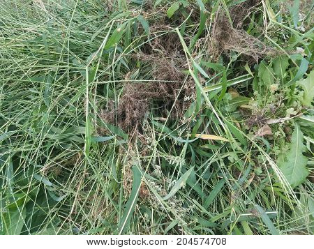 leaves and grasses and weeds in a big pile poster