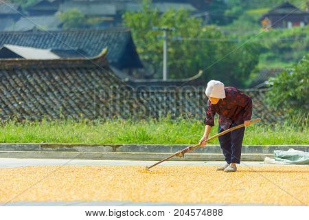 Old Chinese Female Farmer Drying Corn Village