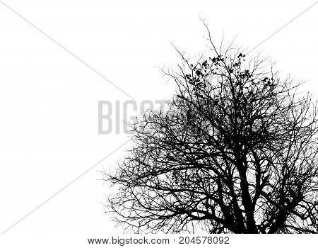 Black and white picture of trees on clear white sky. Use for death mourning and sadness concept