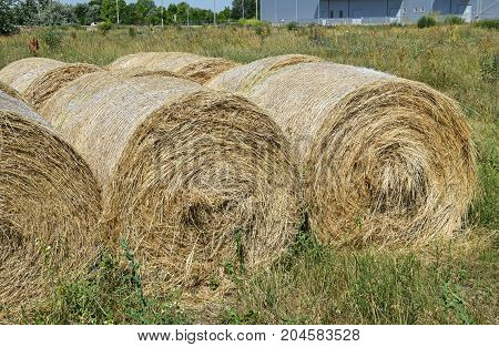 Straw stacks on the meadow in summer
