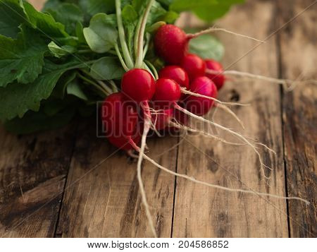 Freshly harvested, purple colorful radish on the wooden table. Growing radish. Growing vegetables