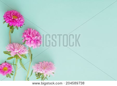 the pink asters flowers on green background