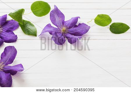 the white wooden background with purple clematis