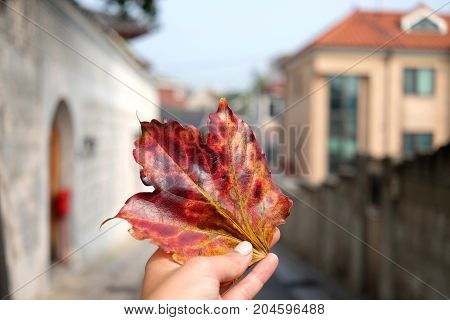Hand holding red maple leaf on autumn street view background