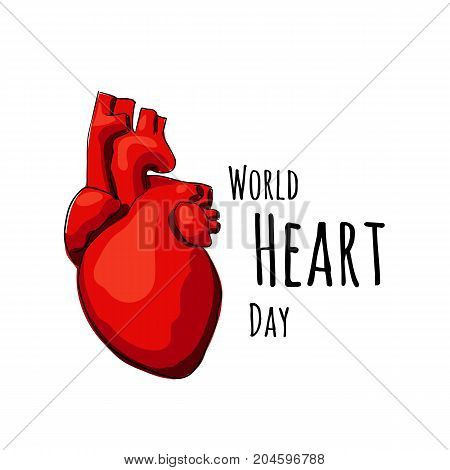 Illustration fo World Heart Day. Vector real heart isolated on a white backgrounds.