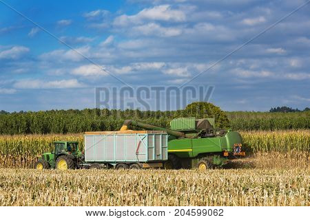 Combine Harvester Corn And Discharge It Into The Trailer